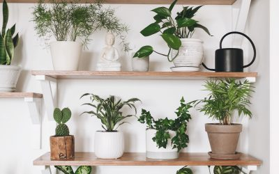 Using plants to spruce up your student space