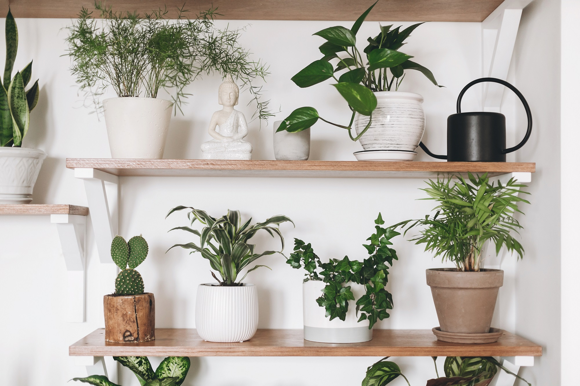indoor plants for students